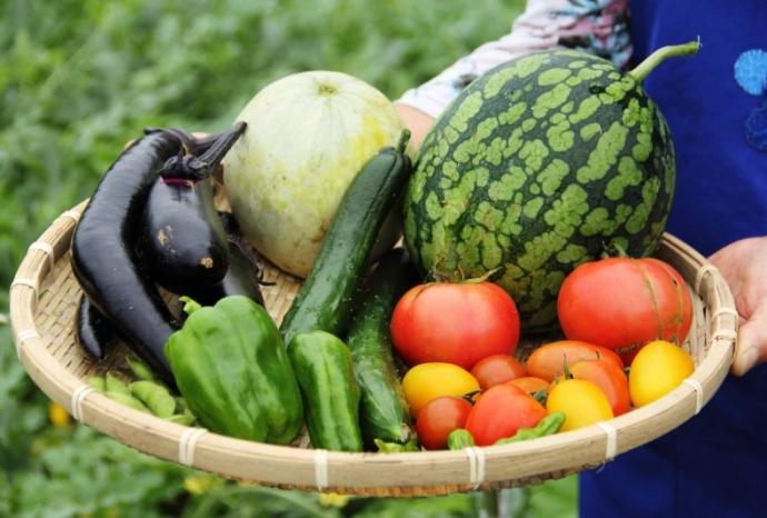 Thực phẩm hữu cơ - Organic Food là gì?